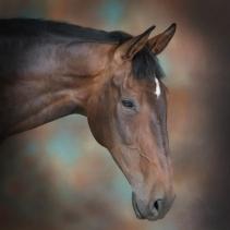 Philip Robinson Equine Studio Photography 0001